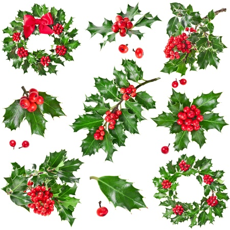 Collection Christmas decoration of European holly ilex isolated on white background photo