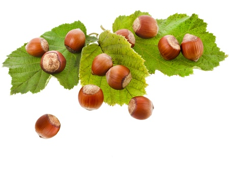 hazelnut filbert in green leaf isolated on white background photo