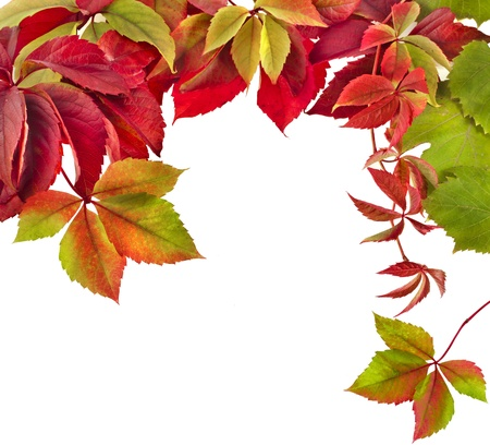 Autumn border frame of colored falling leaves on white Stock Photo - 17787403