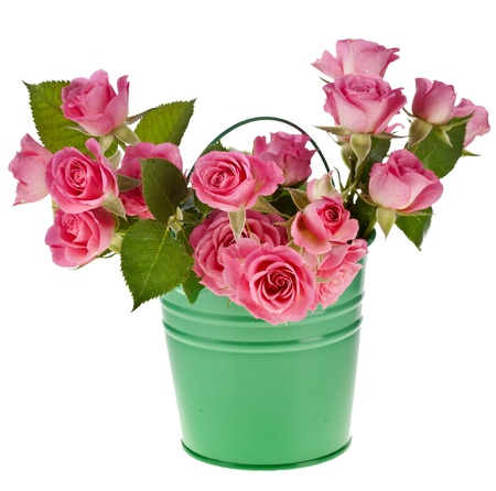 flower boxes: bouquet pink roses in a green bucket isolated on white