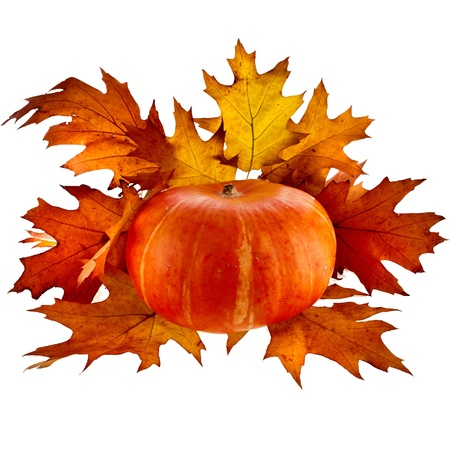 Pumpkin with Colorful autumn leaves red oak  Quercus rubra  isolate on white photo