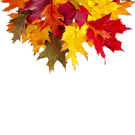 Border of colored falling leafs quercus rubra on white background Stock Photo - 17787569