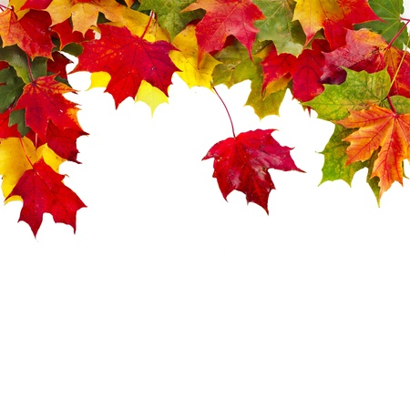 Autumn card of colored falling leafs on white background Stock Photo - 17787615