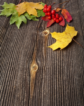 Autumn Leaves over wooden texture background with copy space photo