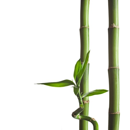 bamboo leaf: Border frame of green bamboo on a white background with copy space for text Stock Photo