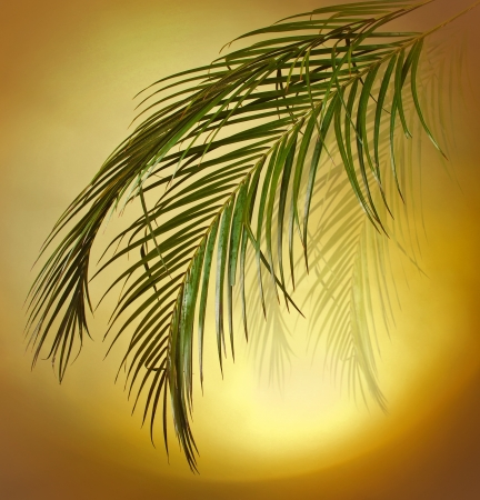cycas: Palm branches on the colorful background Stock Photo