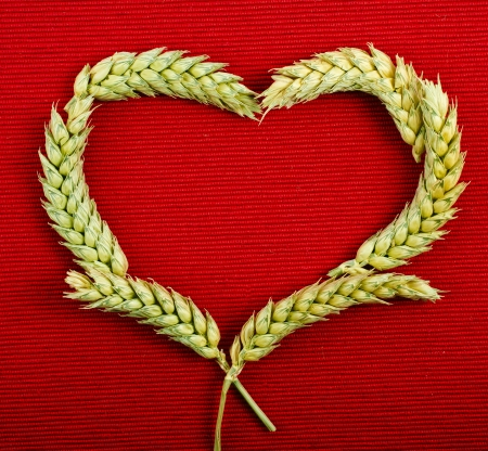 cereal plant: frame heart shape symbol of wheat ears on red texture background