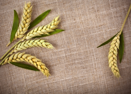 wheat ears on sack texture background photo