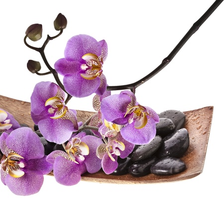 orchid and spa stones isolated on white photo