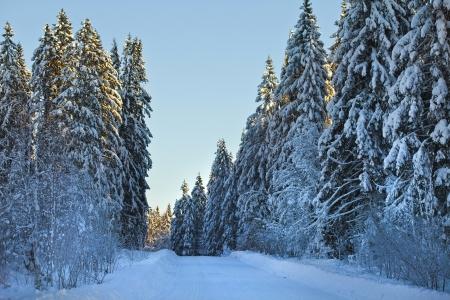 Snowy winter road Stock Photo - 18375604