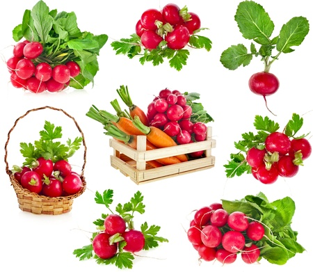 fresh red radish isolated on white background cutout photo