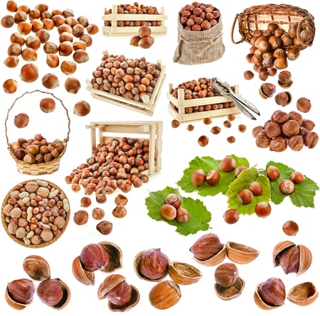 hazelnut filbert nuts , collection set isolated on a white background photo