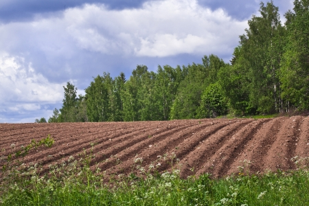 ploughed field: agricultural fields background Stock Photo