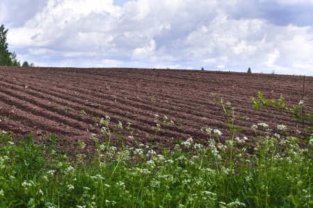 agricultural fields background Stock Photo - 18503941