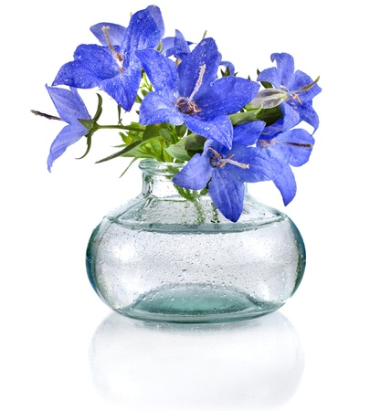 bouquet of blue campanula flowers in glass bottle isolated on white background photo