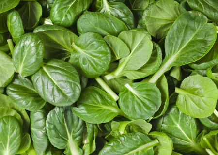 chinese spinach: fresh green leaves spinach or pak choi Stock Photo