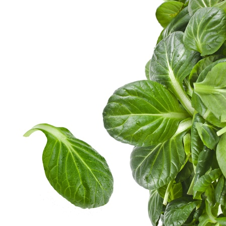fresh green leaves spinach or pak choi isolated on a white background photo