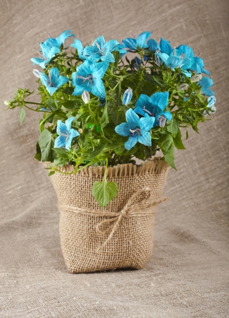 bouquet of blueflowers on natural linen canvas texture backdrop with copy space for text photo