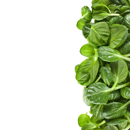 green cabbage: border of fresh green leaves spinach or pak choi isolated on a white background Stock Photo