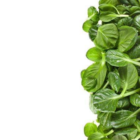 espinaca: frontera verde de hojas frescas de espinaca o pak choi aislado en un fondo blanco