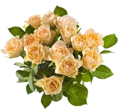 rose bouquet: Wedding bouquet of cream roses isolated on white