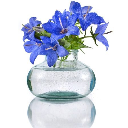 bouquet bunch of blue campanula flowers in glass bottle isolated on white background photo