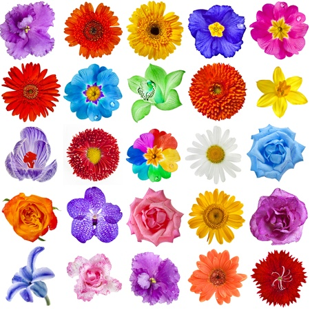 Colored Flower heads collection set isolated on white background photo