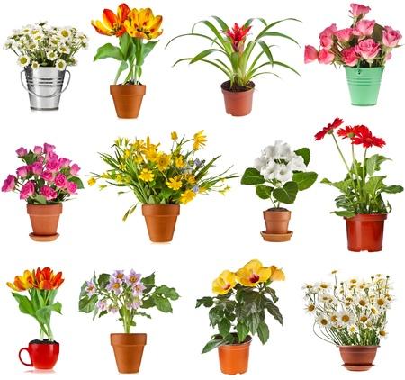 collectie set van kleurrijke boeket bloemen in bloempot en emmer, geïsoleerd op een witte achtergrond Stockfoto