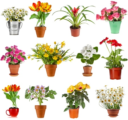 Potted plants: collection set of colorful bouquet flower in flowerpot and bucket, isolated on white background Stock Photo