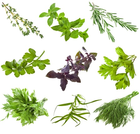 Collection set of fresh herbs isolated on white background photo