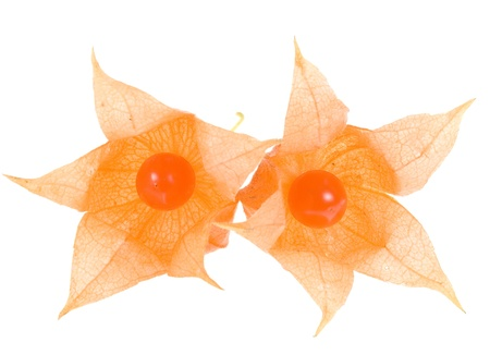 physalis: physalis on white background