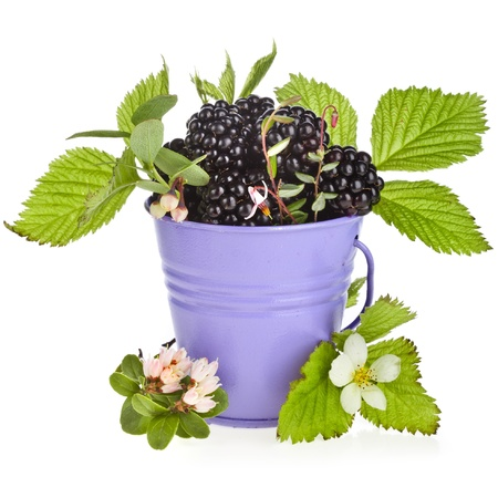 bramble blackberry berries with flower bloom in a color bucket isolated on white background photo