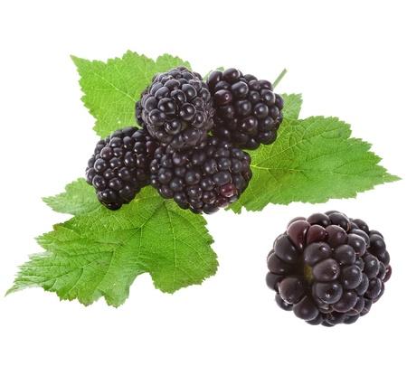 blackberry fruit: Blackberry dewberry on a white background