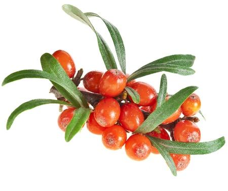 buckthorn: sea buckthorn berries isolated on the white Stock Photo