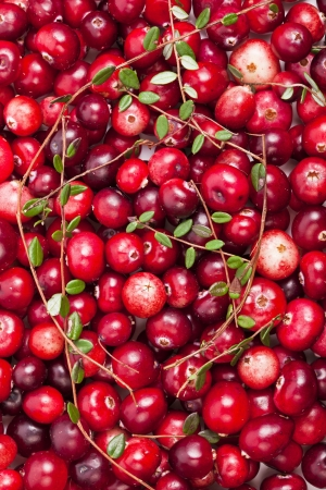 swamp: Fresh red cranberries with leaves