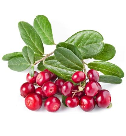 canneberges: Cowberries isol� sur blanc Banque d'images