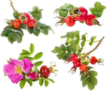 Collection set of rose hip with berry isolated on a white background