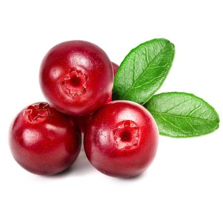 cranberry: Cowberry Lingonberry  Vaccinium vitis-idaea  isolated on white background