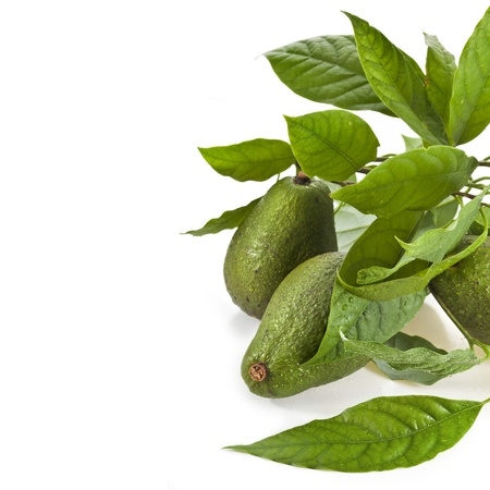 hass: Border of Avocado fruits with young leaves from Avocado tree, isolated on white