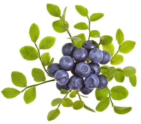 blueberry decor closeup macro isolated on a white background photo