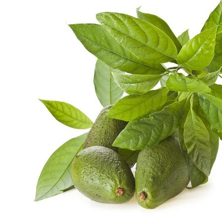 hass: Avocado fruit tree close up  isolated on white background Stock Photo