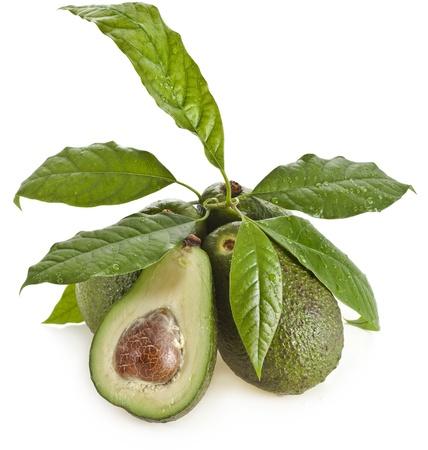 avocado: Frutti di avocado con giovani foglie di albero di avocado, isolato su bianco