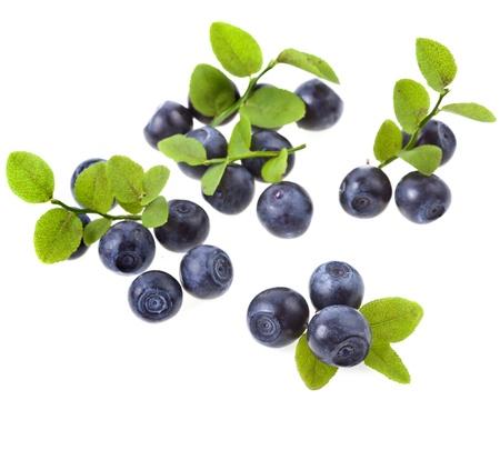 the blueberry: blueberry isolated on white Stock Photo
