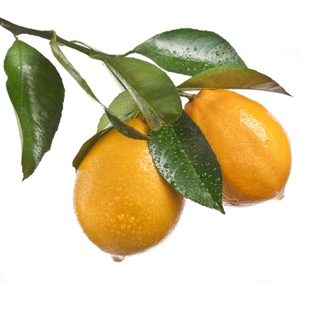 Lemon on a white background photo