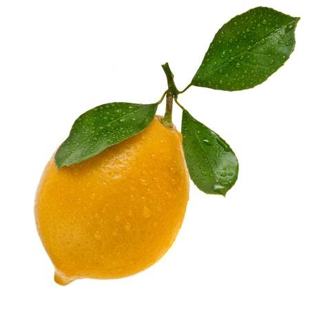 citrus tree: Lemon isolated on a white background Stock Photo