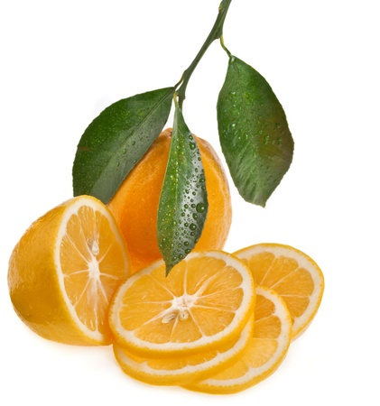 lemon tree: citrus isolated on a white background