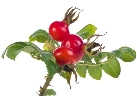 bunch of rose hip with berry isolated on white