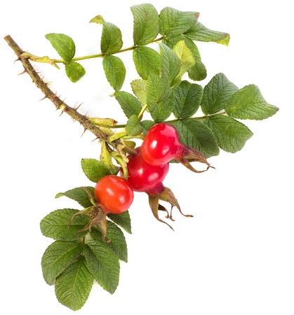 Bündel von Hagebutten mit Beeren isoliert auf weiß Standard-Bild