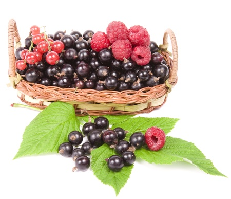 raspberry and currant isolated on a white background photo