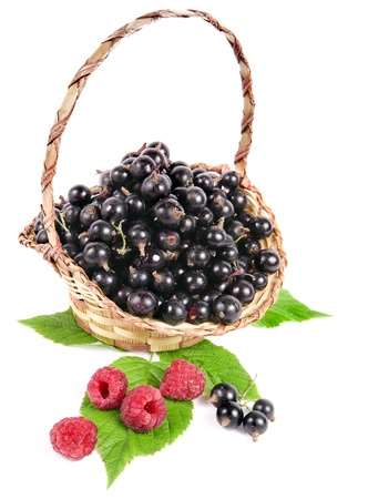 raspberry and black currant in basket isolated on a white background photo